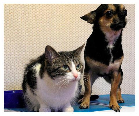 mascotas-hotel-coruna